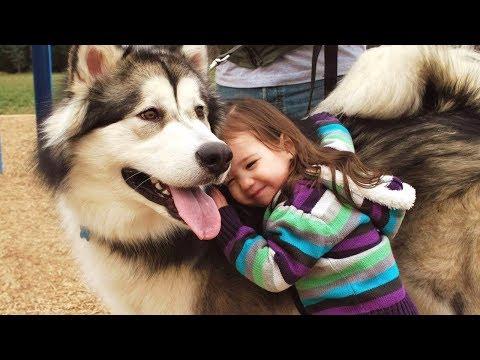 Cute dog & baby compilation 2018 - Cachorros Y Bebés Jugando Juntos. Compilación #4