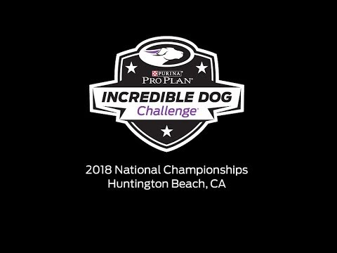 Diving Dog Competition - 2018 Purina Pro Plan Incredible Dog Challenge National Championship