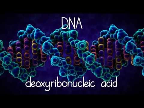 Thumbnail: The Structure of DNA