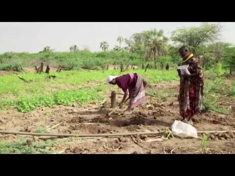 كينيا: تحسين مستوى المعيشة