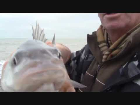 Bass flounder dab & whiting...2012 .wmv