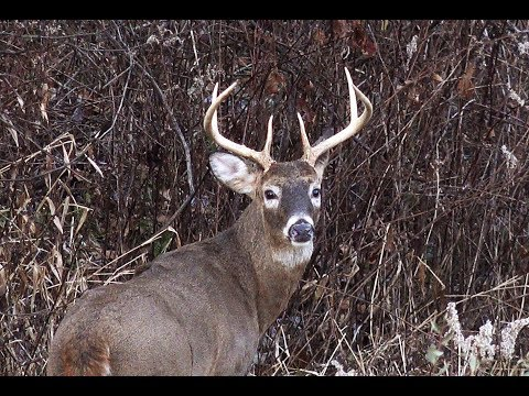 2017 Pennsylvania Deer Season Opening Two Days - Royer