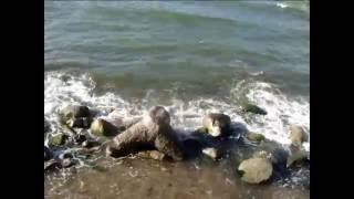 Муслим Магомаев  О море, море