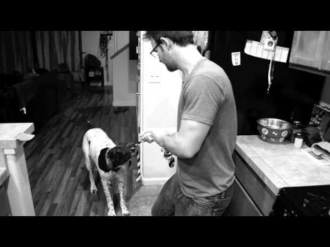 German Shorthaired Pointer Practicing for 50 tricks video