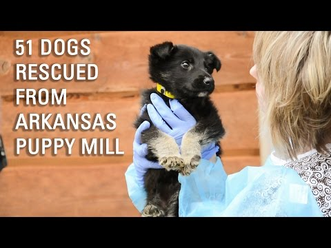 51 Dogs Rescued from Puppy Mill in Arkansas
