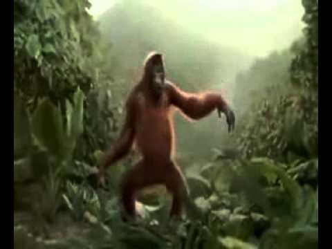 Monyet Joget Sakitnya Tuh Disini