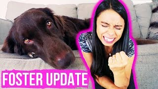 We Had a Scare // Foster Dog Update
