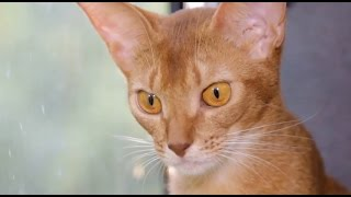 Зачем нужна дегельминтизация домашних животных?