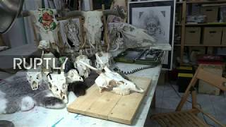 LIVE from Asturias, as artist transforms animal skull into art