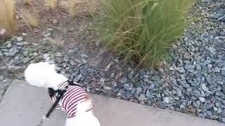 [말티즈] 산책하는 강아지 / 태태랑 가을 공원 힐링