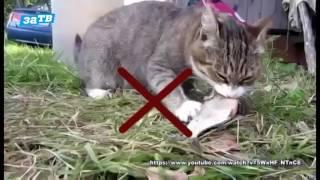 Планета ZOO|| Как перевести кошку с сухого корма на натуральный?