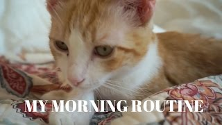 A Cat's Morning Routine // 2ClassyCats