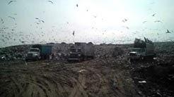 the dump - Dumpster rental Dallas TX