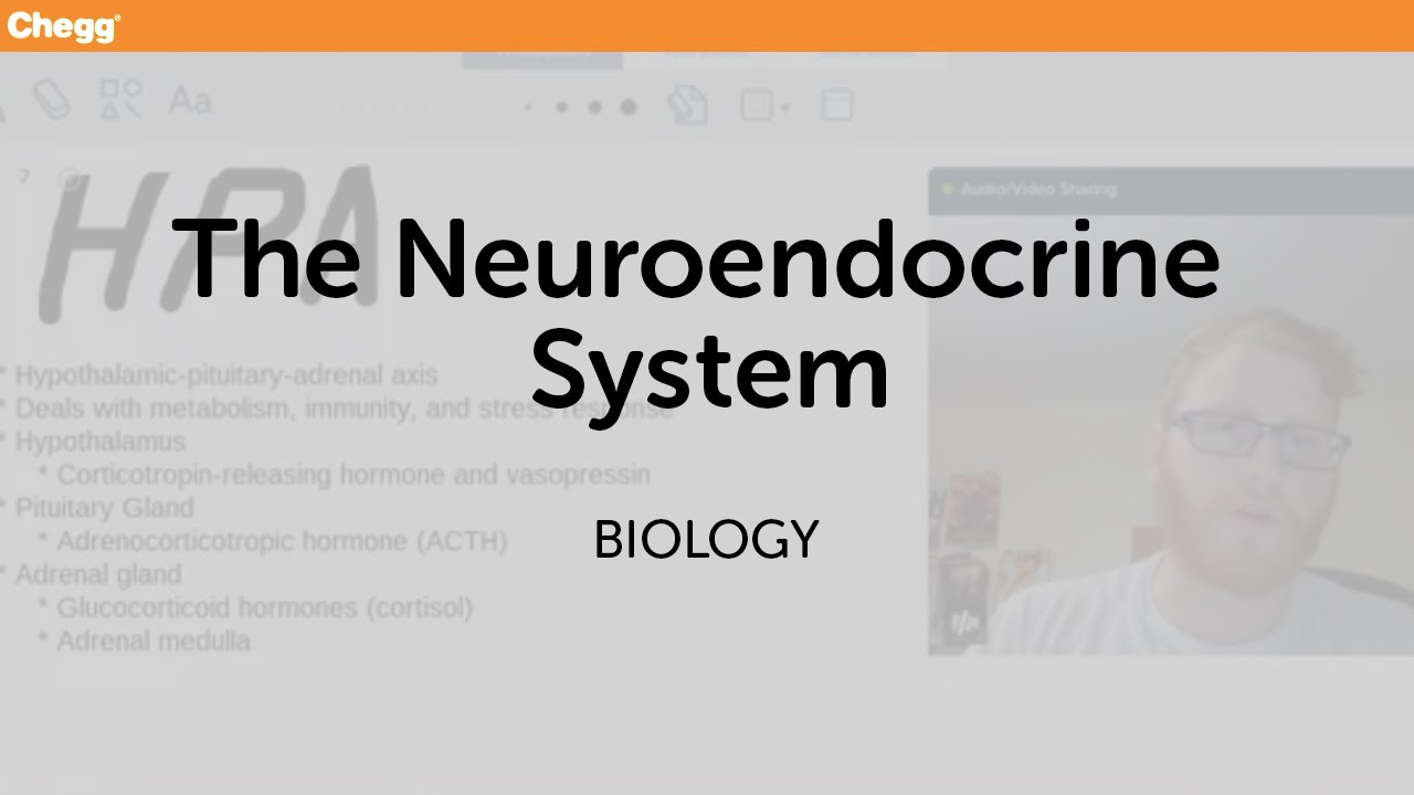 The Neuroendocrine System | Biology | Chegg Tutors - YouTube