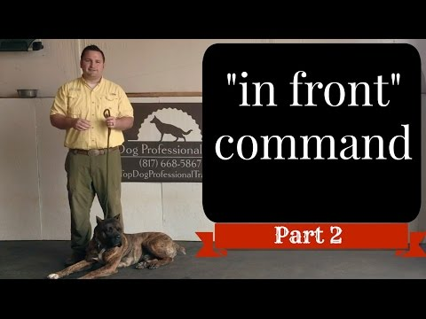"Service Dog Public Access SAFETY ""In Front"" Command (part 2)@TopDogTx"