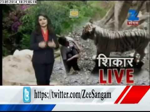 Tiger killed a man in Delhi Zoo