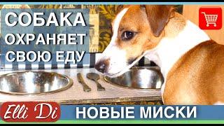 СОБАКА ОХРАНЯЕТ ЕДУ? НОВЫЕ МИСКИ ДЛЯ СОБАКИ | ELLI DI(Моя собака Джина не охраняет еду, почему? См до конца. Миски для собаки заказала здесь: http://dogcat-design.ru ▽ Я в..., 2016-05-26T12:23:13.000Z)