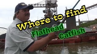 Where to find Flathead Catfish in Rivers