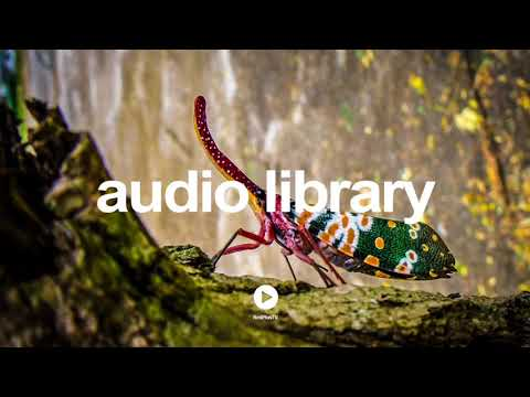 Comparsa - Latinesque by Kevin MacLeod | No Copyright Music YouTube - Free Audio Library