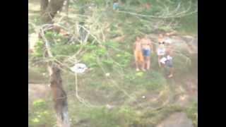 Cachoeira Ouro Fino - Santa Isabel - SP - Alto Tietê.AVI