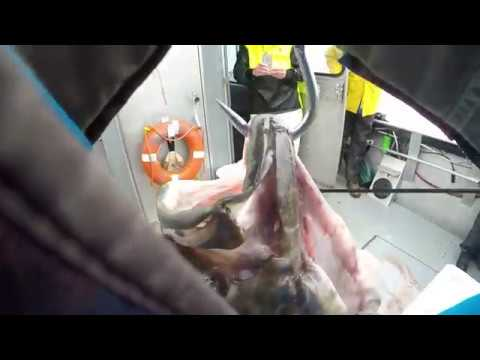 Fishing For MONSTER HALIBUT In Alaska!!!