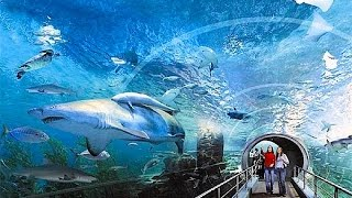 Siam Ocean World Bangkok, Siam Paragon 2015, video review