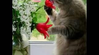 Милые котята фотографии под музыку