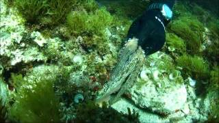 Majorca Diving Trip  March 2013