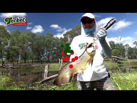 Saratoga fishing on Honker frog in Australia