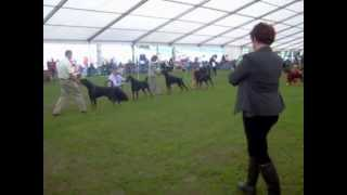 Welsh Kennel Club Ch Show 2012 Dobermann Dog Challenge