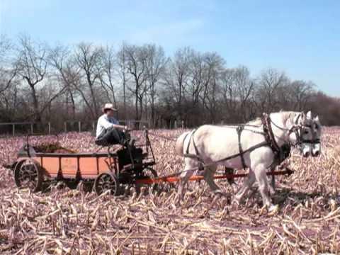 Agriculture History:  Horse-drawn Manure Spreader at Kline Creek Farm