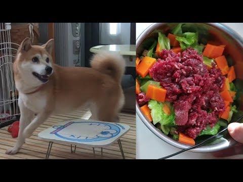 柴犬小春 【ASMR】新型鹿肉ジビエが嬉しすぎた柴犬の顔!音フェチ、飯テロ 提供:ジビエ本宮