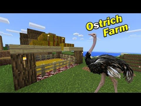 HOW TO MAKE AN OSTRICH FARM | Minecraft PE