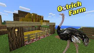 HOW TO MAKE AN OSTRICH FARM   Minecraft PE
