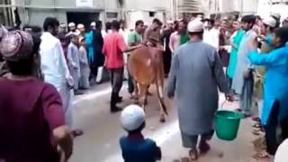 Very Expert Qasai With Sharp Knife    EID UL AZHA,Very Very Expert Qasai -- MUST WATCH AMAZING VIDEO