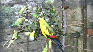 Voliéra s papoušky   a aronie
