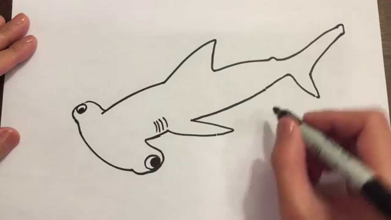 draw a hammerhead shark youtube