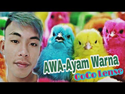 AWA(Ayam Warna) - CoCo Lense #BIKOLAmanajemen [Official Video]FULL