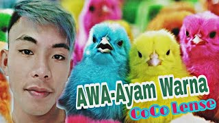 AWA(Ayam Warna) - CoCo Lense #BIKOLAmanajemen [Official Video]FULL