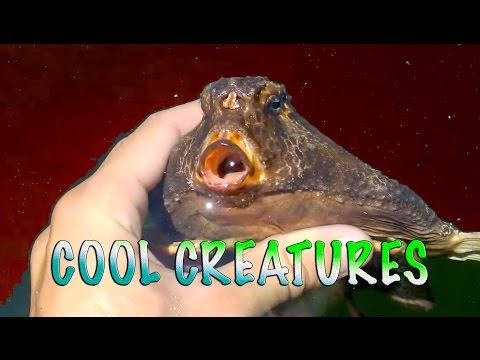 Top 10 Aquarium Animals