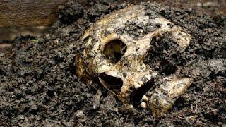 Тайна, закопанная в могиле (полный выпуск) | Говорить Україна