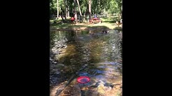 Dog park fun @Dogwood Park in Jax., FL. Shiba play dates