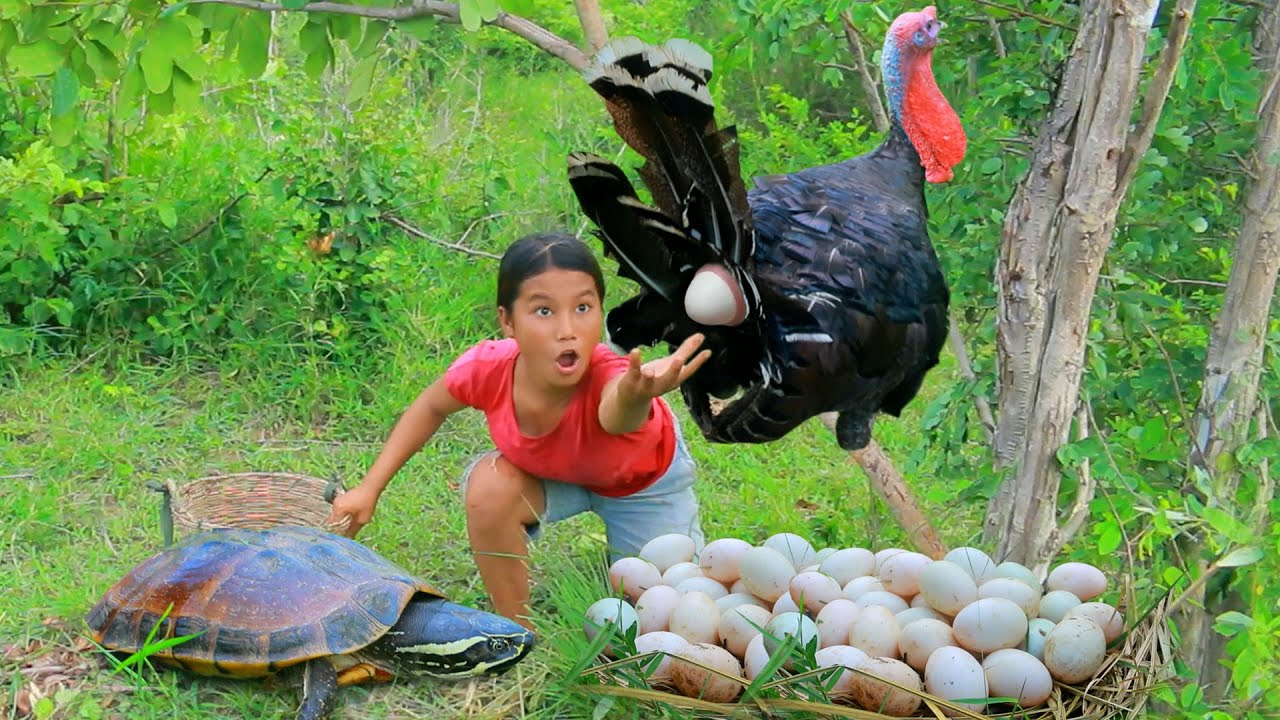 Women Fond turkey egg and Turtle in forest - Cooking Soup turkey egg for dog Eating delicious