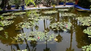 Le Jardin Majorelle in Marrakech, Morocco - DSC 0984