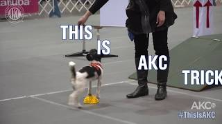 This is Trick Dog - AKC National Championship 2018