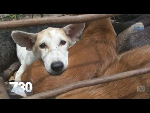 'Barbaric, evil': activists fight dog meat trade