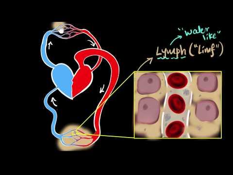 Lymph, Lymph Nodes, & Lymphatic System | Life Processes | Biology | Khan Academy