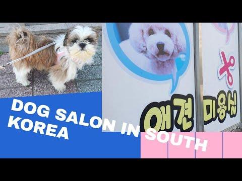 My DOG HAIR CUT in SALON? | WENT WRONG? | DOG SALON | EXPENSIVE | SOUTH KOREA | 2020