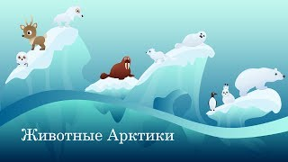 Животные Арктики. Интересные факты для детей