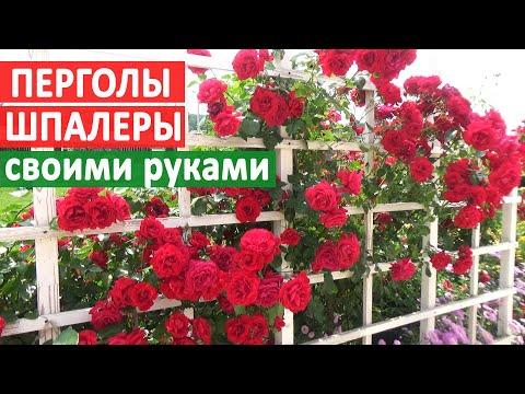 Шпалера для плетистой розы своими руками фото